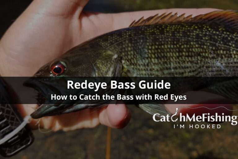 Redeye Bass Guide How to catch the Bass with Red Eyes