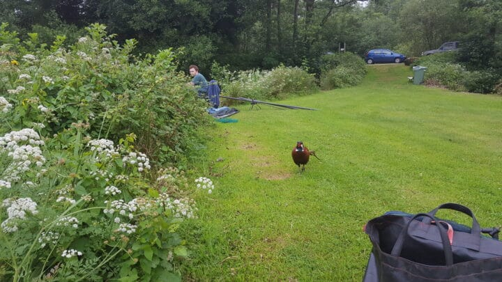 Mr pheasant descided to pay use a visit while fishing