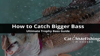 How to Catch Bigger Bass Ultimate Trophy Bass Guide