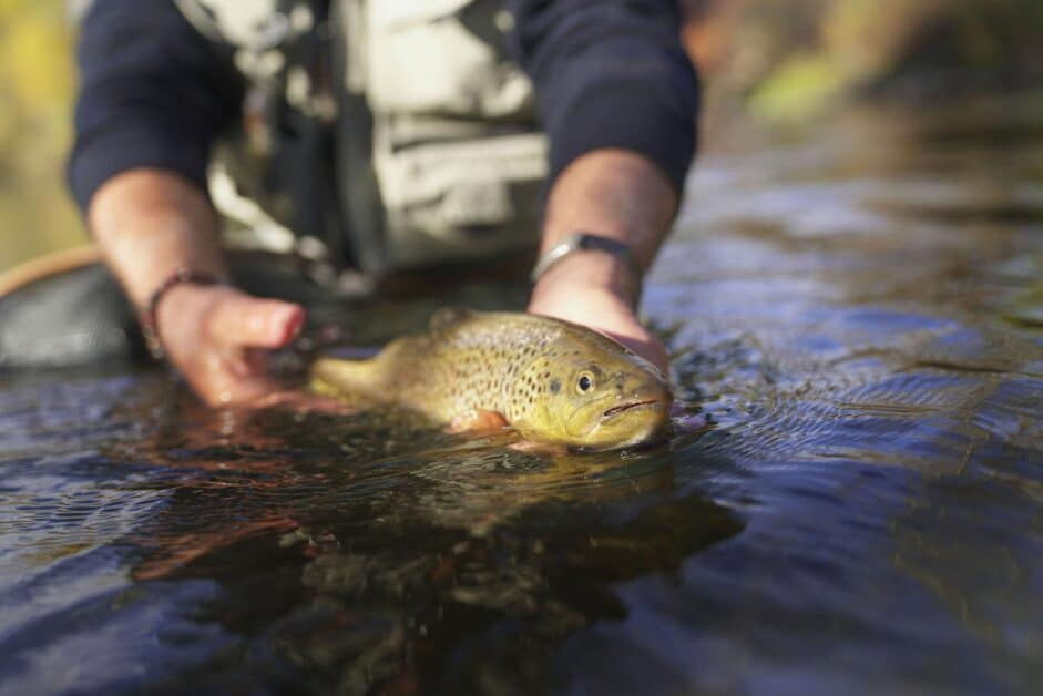 Catching trout in creeks