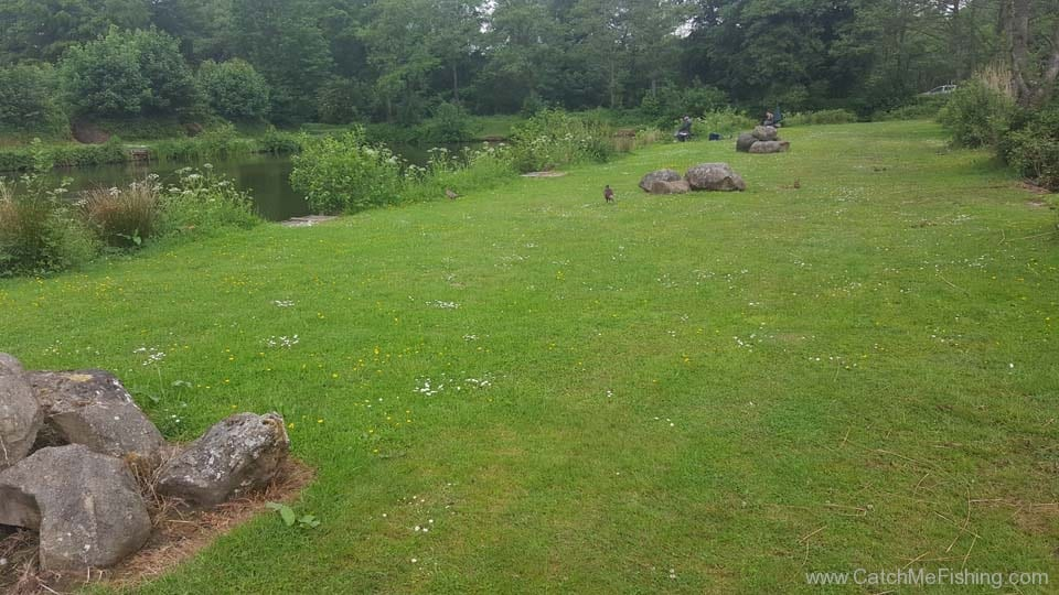 Foxhouses-wyre-parks-fishery-pheasant-1