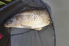Foxhouses-wyre-parks-fishery-match-lake-Carp-2