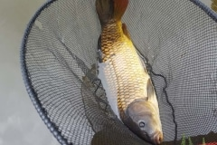 Foxhouses-wyre-parks-fishery-match-lake-Carp