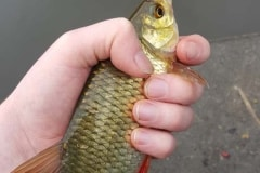 Foxhouses-wyre-parks-fishery-match-lake-Roach-1